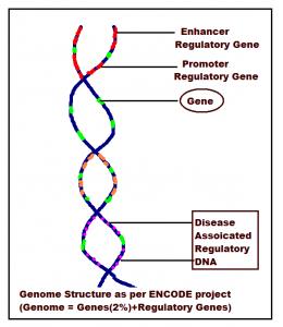 ENCODE project